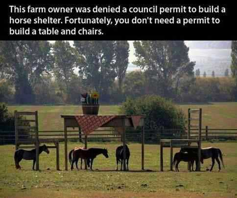 table-chair-horse-shelter.jpg